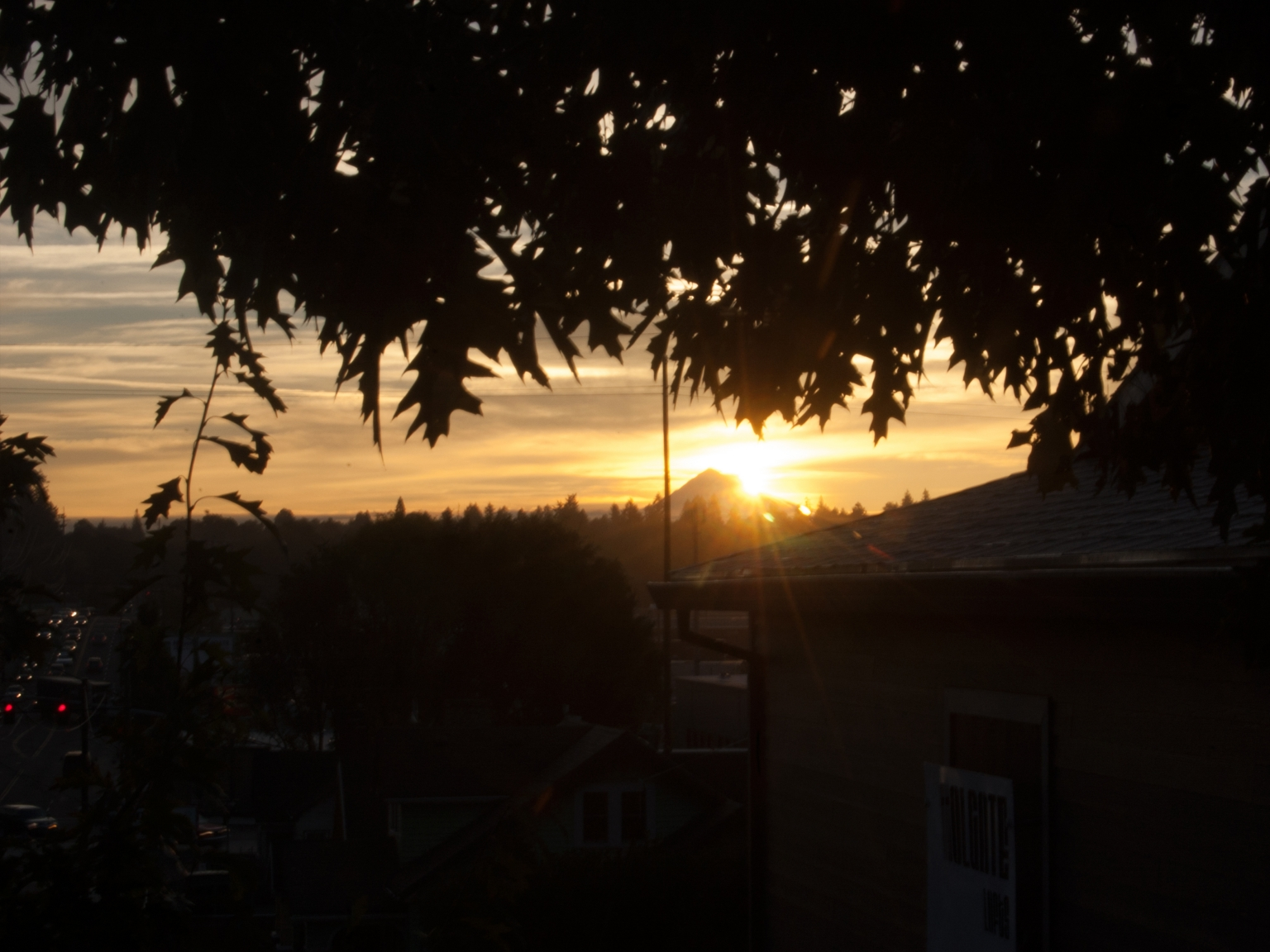 Autumnal Hood Day, 08 October 2015